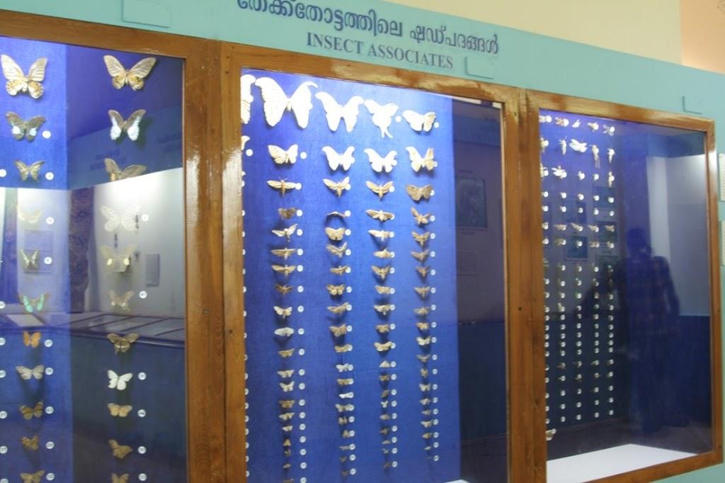 Teak-Museum-Nilambur-073